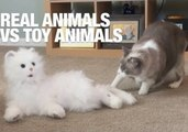 Attack of the Clones! Real Animals Vs. Toy Animals