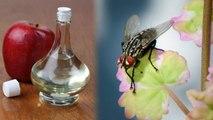 Home Remedies to get rid of Houseflies: मक्खियों से छुटकारा दिलाएंगे ये आसान घरेलू उपाय | Boldsky
