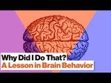 3 Brain Systems That Control Your Behavior: Reptilian, Limbic, Neo Cortex | Robert Sapolsky