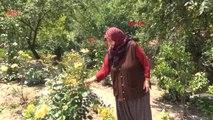 Yalova Muharrem İnce'nin Annesi Zekiye İnce 'oğlumla Siyaset Konuşmam