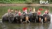 Thaïlande : des initiatives pour protéger les éléphants