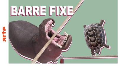 Barre fixe - ATHLETICUS - ARTE