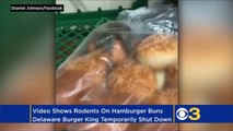 Dirty Dining Burger King Restaurant In Delaware Temporarily Shut Down After Rodents Are Seen Crawling Through Packets Of Buns!