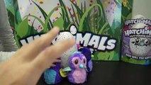 VOUS ÊTES LES 1ers AU MONDE À VOIR ÇA !! • Hatchimals Jumeaux - Studio Bubble Tea Hatchimals twins