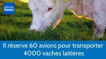 Cet homme d'affaires qatari réserve 60 avions pour transporter 4000 vaches laitières