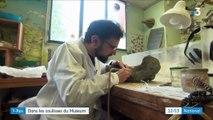 Tyrannosaure : un squelette extraordinaire au Muséum national d'Histoire naturelle