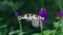 Quote of the Day – Maya Angelou