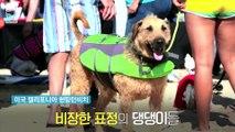 [엠빅비디오] '개간지' 쩌는 '서핑 댕댕이'