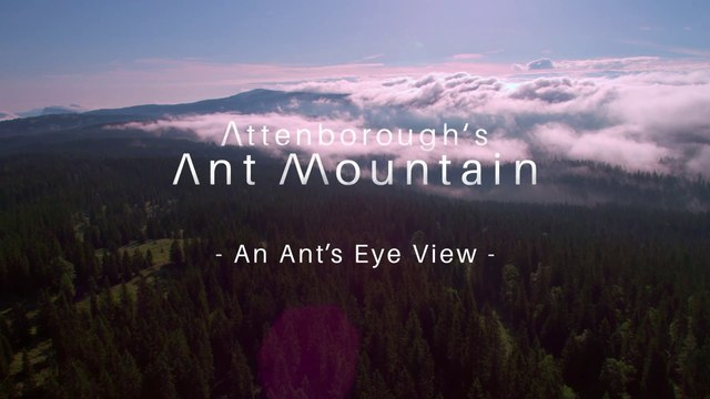 David.Attenboroughs.Ant.Mountain.S01E02