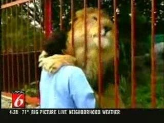 Le roi des animaux a le coeur tendre