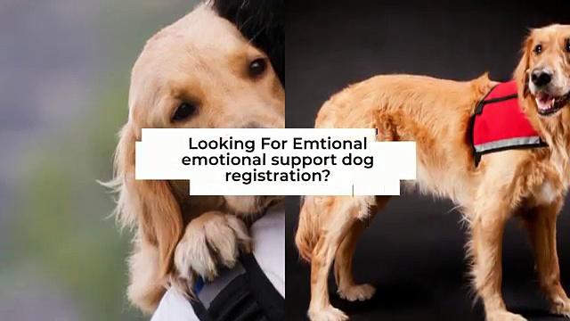 Emotional Support Vest