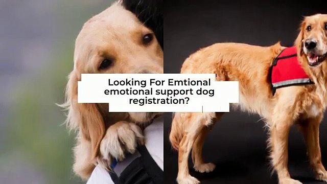 Emotional Support Services