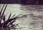 Backyard Flooded After Severe Weather Lashes Gisborne