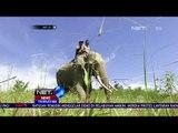 Seekor Gajah Ditemukan Mati Tanpa Gading - NET 10