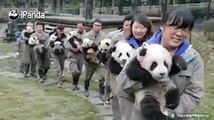 #CCRCGPWhat's this promotional event? Why has everyone got a free panda?! Well, except for the last poor guy.
