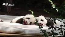 A panda a day, keeps the sorrow away.Every day it's me. I just wanna sleep and not wanna work!