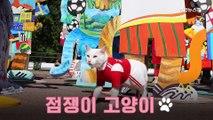 """러시아 점쟁이 고양이 """"월드컵 개막전 승자가 궁금하냐옹"""""""