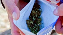 1st nation to legalize pot struggles to keep up with demand