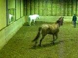 longe d'un cheval d'1m78