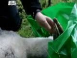 Animal Cops: Scottish SPCA Ep 4