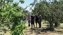 Alpes-de-Haute-Provence : visite dans les champs pour découvrir les essais de variétés de blés Bio