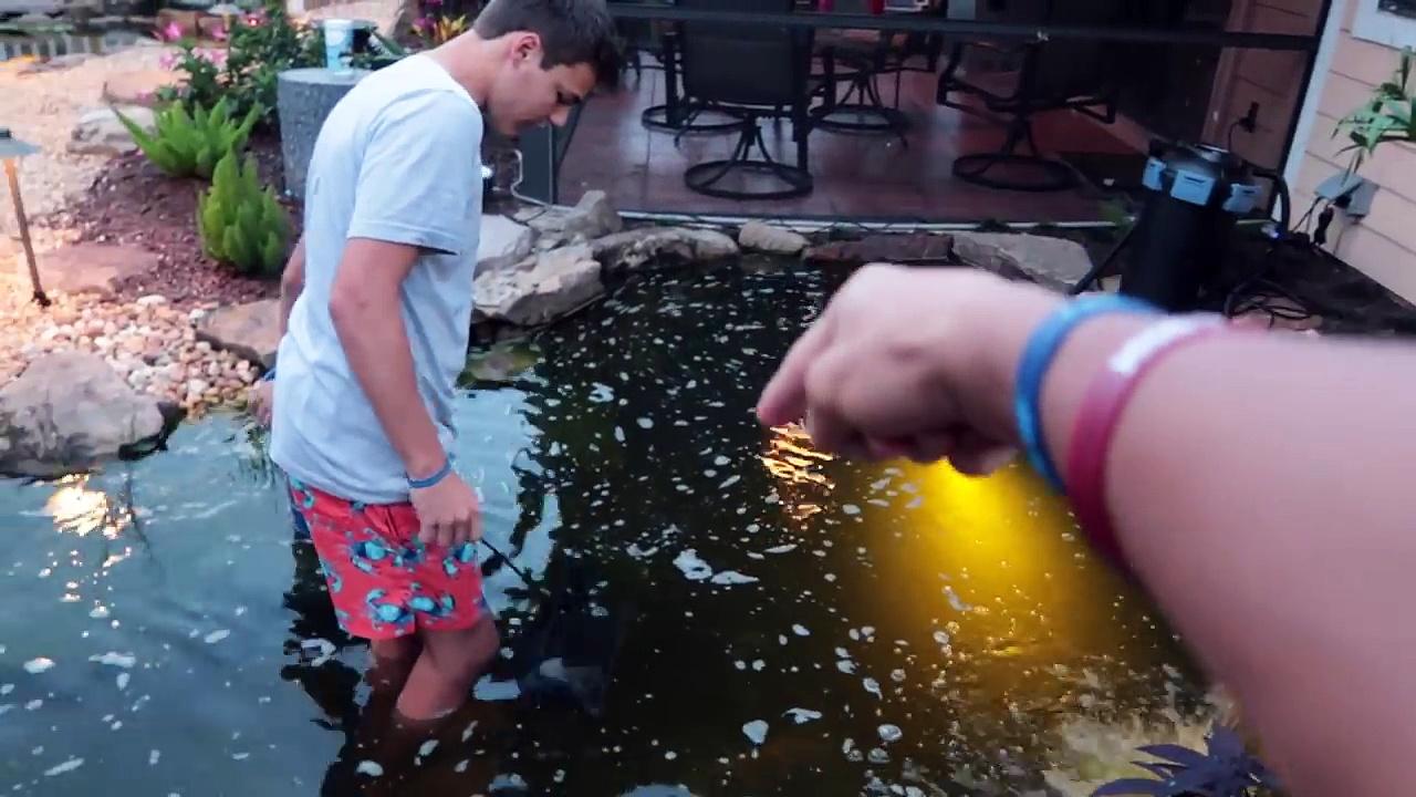 Putting FISH into My POOL POND!!!