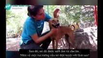 không cầm được nước mắt khi xem clip giải cứu động vật