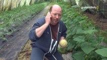 Le melon - Groland Le Zapoï du 16/06 - CANAL+
