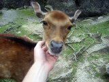 Une biche vraiment très très amicale