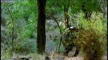 Vadvilág - 01 - A Tigris