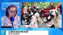 Turquie : la cruauté envers les animaux devient un thème centrale de la campagne présidentielle