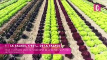 La salade, et ses idées reçues diététiques