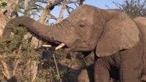 Filler hakkında bilinmeyen ilginç bilgiler