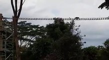 MONKEY BUSINESS: Macaques crossing the rope bridge over Mandai Lake Road, which was installed to help animals living in trees move across safely. (Video: Man