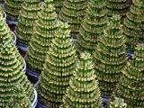 Best Indoor Plants II कमरे में नहीं आती है धूप तो लगायें ये पौधे II Shade Loving Plants II These Plants Easily Grows without direct Sunlight II Best Plants For Bed Room II Plants for Home II Plants That Grows without Sunlight II