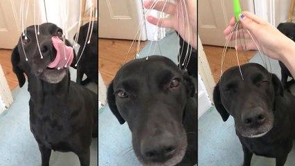 Un chien qui semble apprécier un massage du crâne