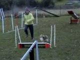 Tess entrainement agility decembre 2007