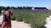 Les touristes adorent la lavande du pont d'Avignon