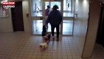 Canada : Un pitbull tue un petit chien dans le hall d'un immeuble, la vidéo choc