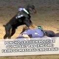 Poncho, le chien policier qui ne sait pas (encore) faire de massage cardiaque