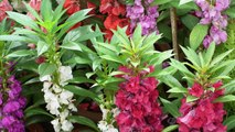 July Growing Flowers (English Subtitles) , ,  जुलाई में लगाये जाने वाले फूल , ,  Beautiful July Flowers , ,  Flowers planted in July , ,  July Growing Flowers , ,  Best Flowering Plants to Grow in July