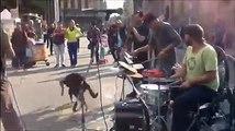 Perro escucha la cancion de musicos callejeros y baila sin parar.