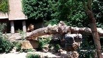 Un héron visite un Zoo au mauvais endroit et au mauvais moment