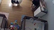 فيديو طفل في 9 من عمره ينقذ أخاه الرضيع من الموت في اللحظة الأخيرة