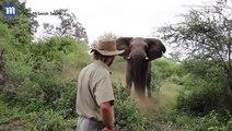 """شاب يواجه """"فيلاً غاضباً"""" حاول مهاجمته ويجبره على التراجع.. فيديو"""