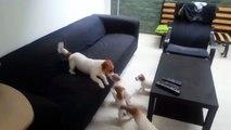 بالفِيديو شاهدوا كيف تلعب الكلاب مع صغارها