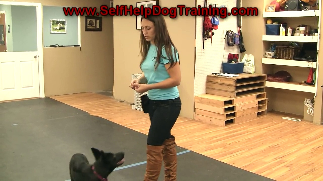 Best way to train a puppy or dog to come when called – Phase 1 (K9-1.com)