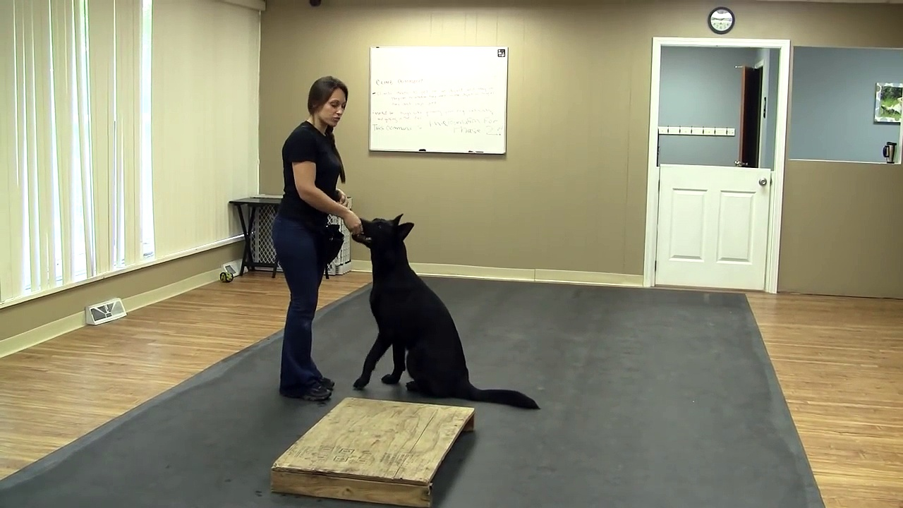 How to Train a Dog or Puppy to Climb (K9-1.com)