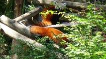 Les animaux du zoo de mulhouse