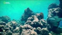 Nuestro planeta, episodio 7 - La Transformación de la Tierra (One Strange Rock) con WillSmith
